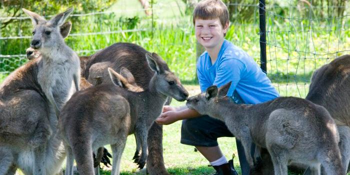maru考拉动物园|景点与预订|菲利普岛自然公园中文